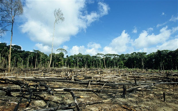 Deforestation - Why it's Important to be Eco-Friendly | Fairly Southern
