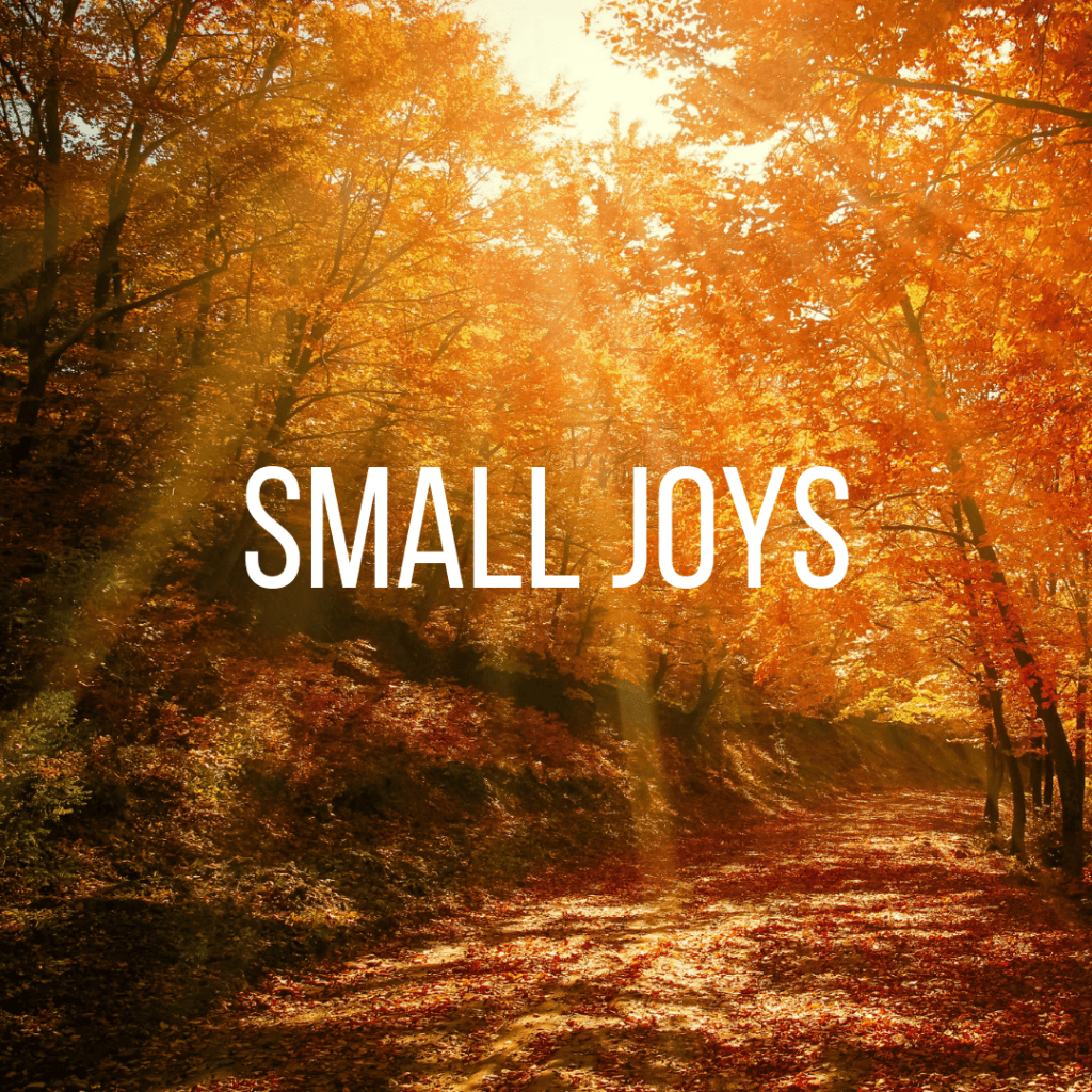 Small Joys Vol. 13 | Fairly Southern