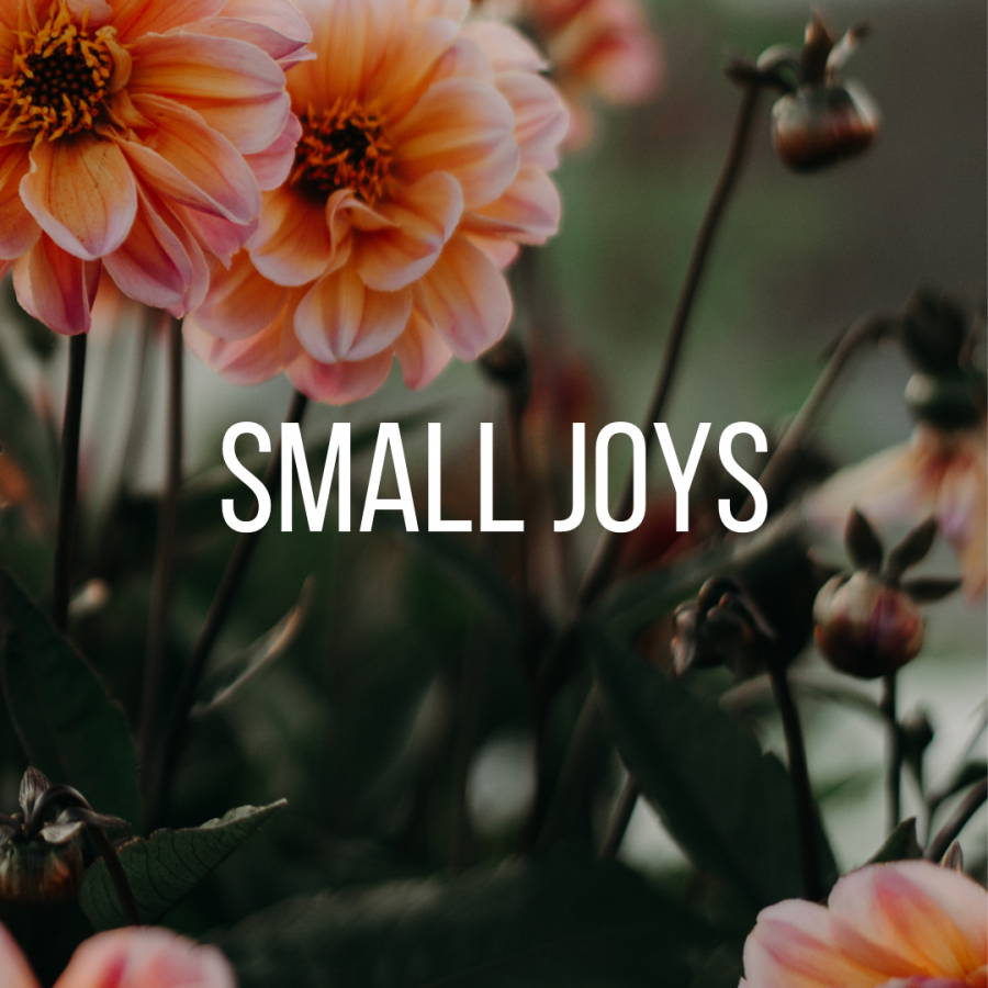 Small Joys: Volume 29